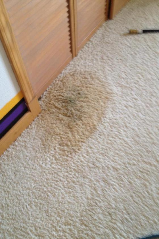 The below photos showcase a classic carpet cleaner's .a pet stain on white carpet! OK, so this carpet is really more cream-colored, but any way you slice it ...