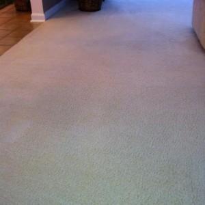 clean carpet denver after before