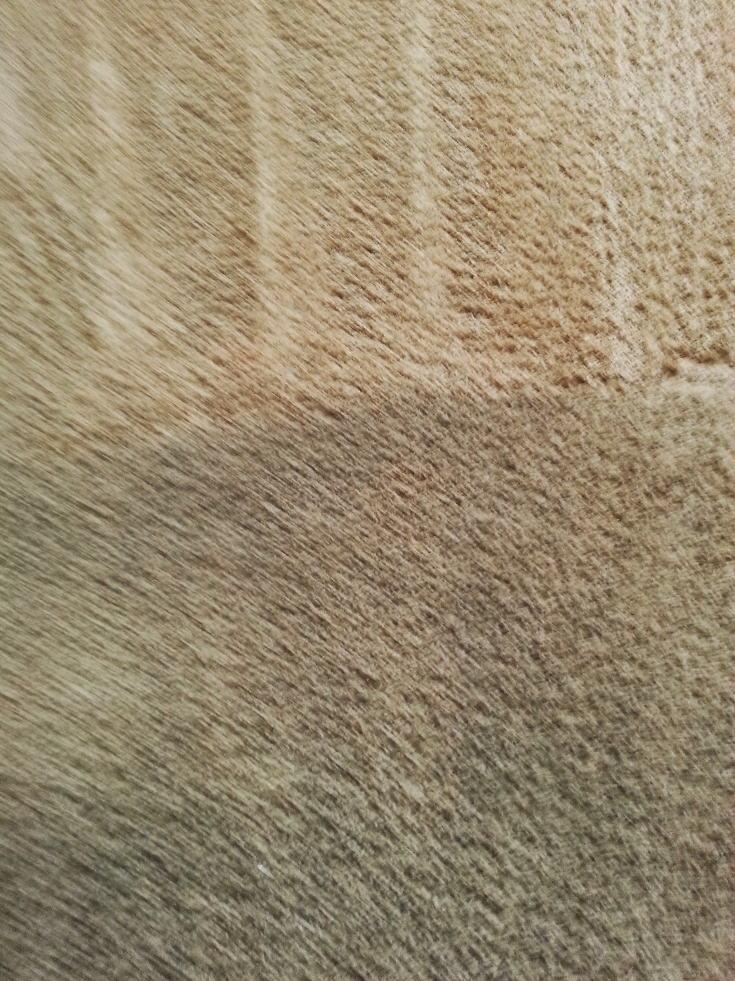 Carpet Cleaning With No Residue Denver